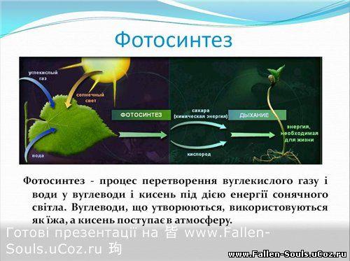 """Скачати готову презентацію PowerPoint з Біології на тему """" Фотосинтез"""" завантажити"""