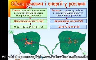 Скачати готову презентацію PowerPoint з Біології на тему Обмін речовин і енергії у рослин завантажити